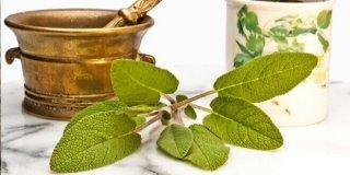 Priprema i ljekovita svojstva čaja od kadulje