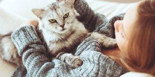 Alergija na mačke – kako ju prepoznati, spriječiti i liječiti?