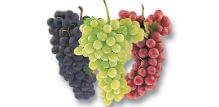 Zašto je grožđe dobro za vas?