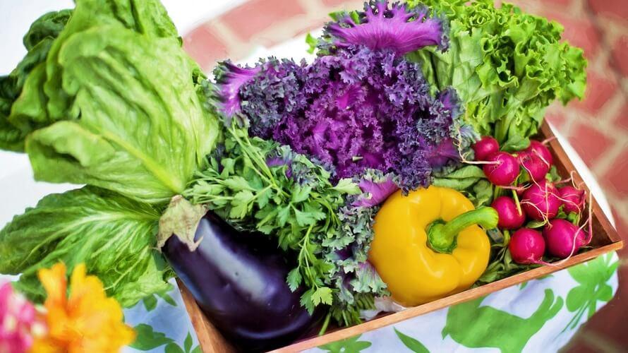 vegetarijanska hrana