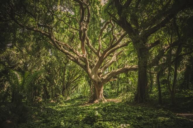 Ljekovitost drveća