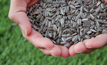 suncokretove sjemenke