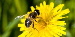 Ubod pčele ili ose – kako ublažiti reakciju?