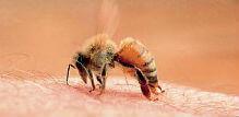 Ubod pčele – šta uzrokuje reakciju i kako da je ublažite?