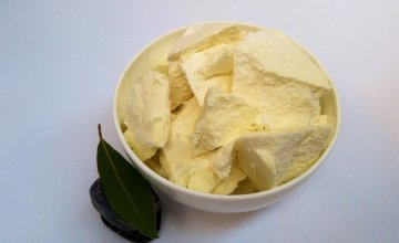 shea maslac
