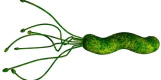 Helicobacter pylori – uzroci, simptomi i liječenje