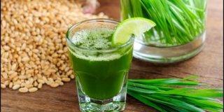 Pšenična trava – ljekovita svojstva i upotreba
