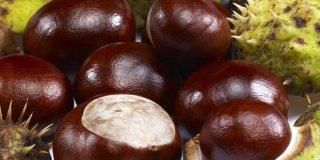 Divlji kesten – lijek za proširene vene i hemoroide