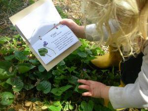 uzgoj-zacinskog-bilja