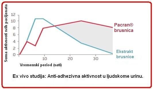 brusnica1