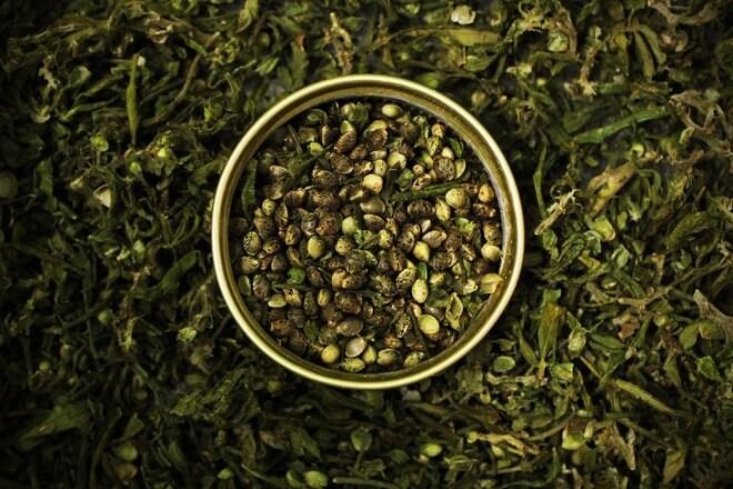 sjemenke konoplje zdravlje