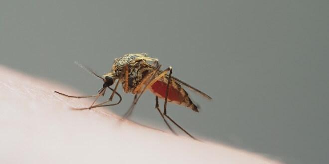 Ubod-komarca-oteklina