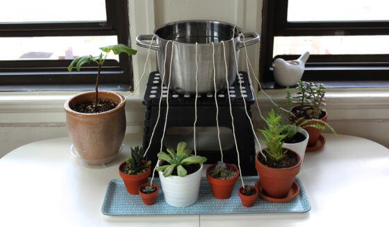 samozalijevanje-bilja
