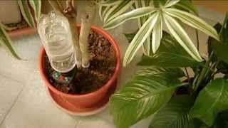 zalijevanje-bilja-2