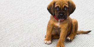 8 stvari koje vaš pas ne voli da mu radite