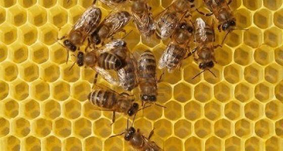 Pčelinji vosak