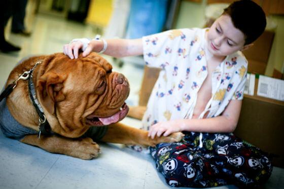 Psi pomažu u liječenju