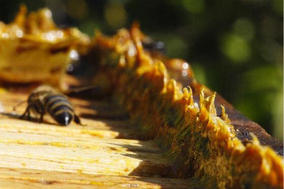 domaci-propolis