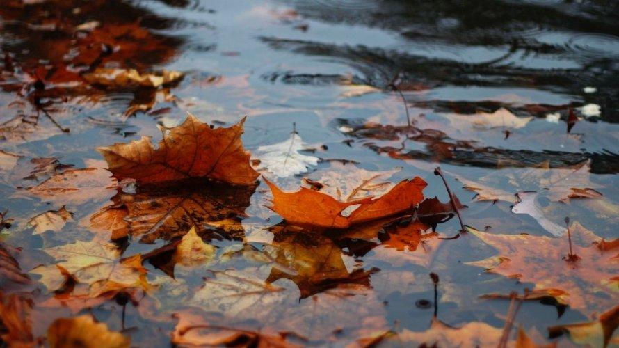Otpalo lišće