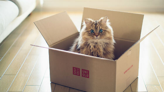 Mačke i kutije