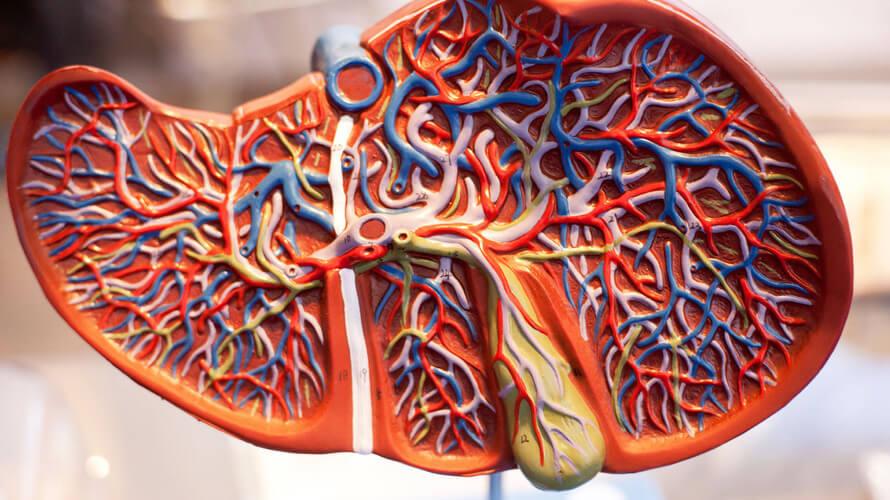 jetra zdravlje