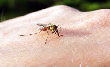 komarci - ugriz