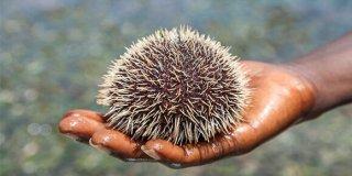 Video: Prva pomoć kod uboda ose, meduze ili morskih ježeva