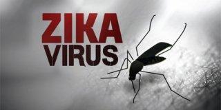 """Epidemija Zika virusom bi se mogla """"ugasiti"""" u roku od 2-3 godine"""