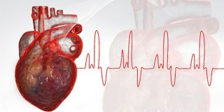 EKG (snimanje elektrokardiograma) – kako se pripremiti za pregled srca?