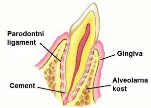 grada-parodonta