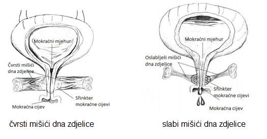 misici_zdjelice