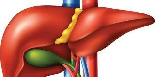 Gama-glutamiltransferaza (krvna pretraga) – kada i zašto je potrebna?