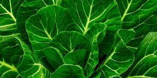 Raštika – kako pripremiti ukusnu biljku koja snižava kolesterol i pomaže u borbi protiv raka
