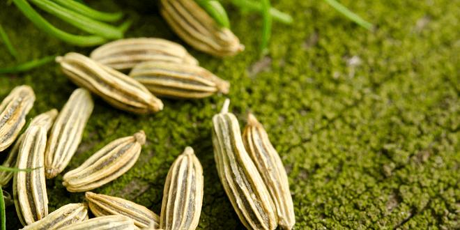 sjemenke-komoraca