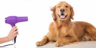 Šampon za suho pranje pasa – prednosti, nedostaci i upute
