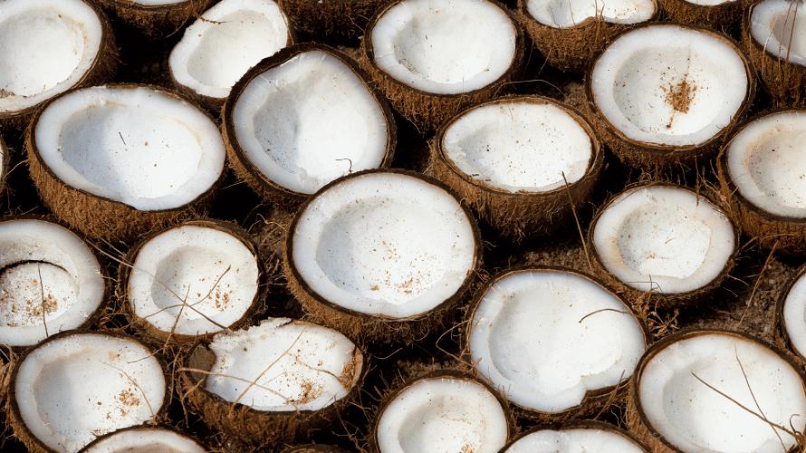 polovice-kokosa