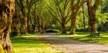 Zeleni park