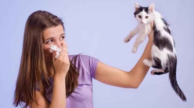 alergija-na-macke