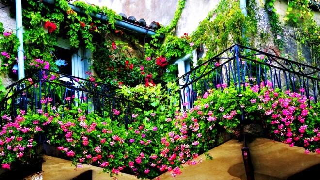 balkonsko_cvijece