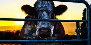3 nevjerojatna razloga koja će vas naučiti zašto jesti manje mesa
