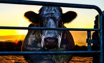 proizvodnja-mesa