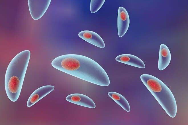toksoplazma mačji parazit