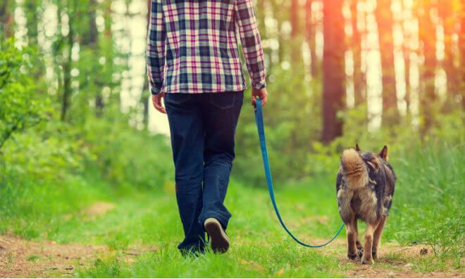 šetnja psa