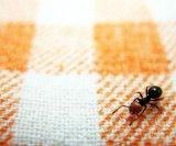 organski-insekticidi