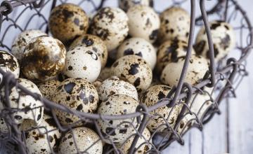 prepelicja-jaja