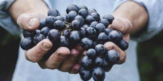 Resveratrol – eliksir zdravlja i ljepote