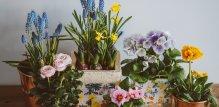 Svježe cvijeće