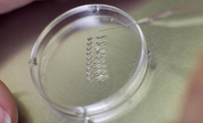 spermiji oplodnja