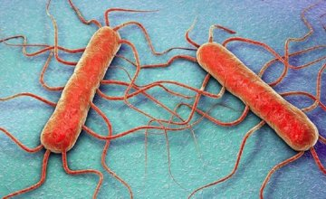 bakterija-listerija