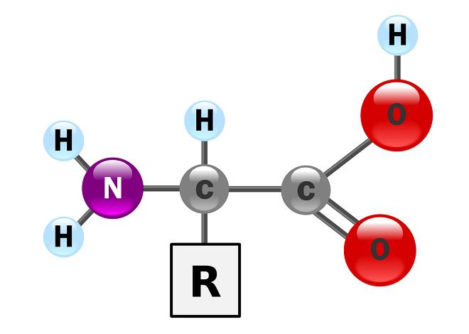 molekula-aminokiseline